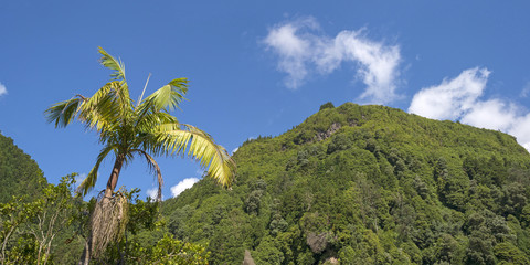 Palm tree in a blue sky above the Azores