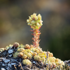 Macro photo of succulent plant