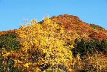 赤く染まる山と黄色に染まった木