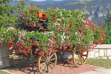 beautiful mountain flower cart with many Geraniums and other flo