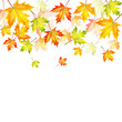 autumn maple leaves on a white background.autumn background.vect