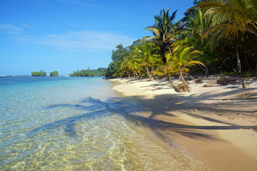 Pristine beach with shade of coconut trees