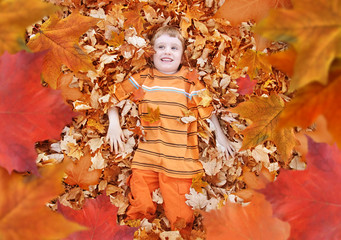 Boy Looking Up at Orange Autumn Fall Leaves