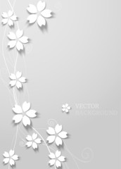 white cherry blossom on white background