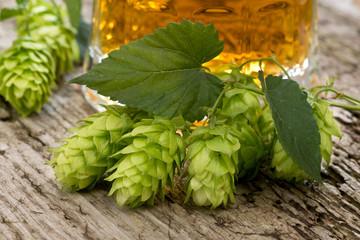 still life with hops