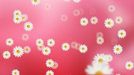 Daisy Flower Animation Background Loop