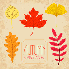 Autumn colorful leaves set