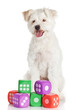 funny dog  with toys isolated on white