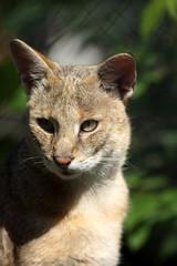 chat des marais