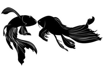 goldfish carp vector isolated on white background