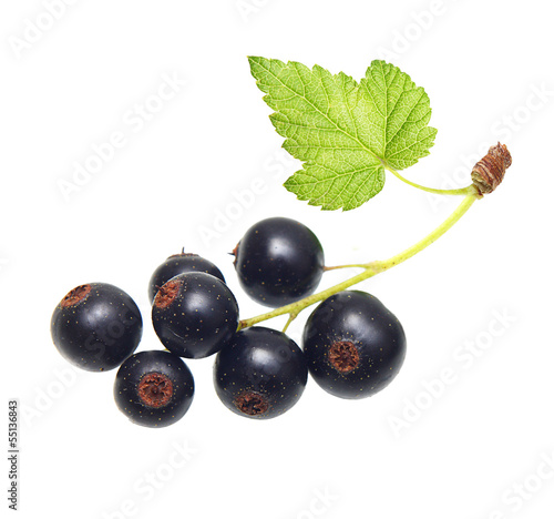 Branch black currants isolated on white