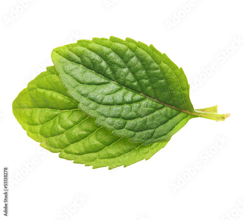 Green mint leaves isolated on white background.