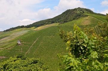 Weinberge bei Bernkastel Kues - Mosel