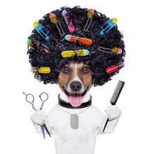 Pies fryzjer z lokówek