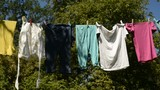 drying Clothes in the Garden