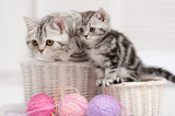 Two cats in a basket with balls of yarn - 55143498