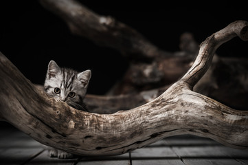 Kitten on driftwood