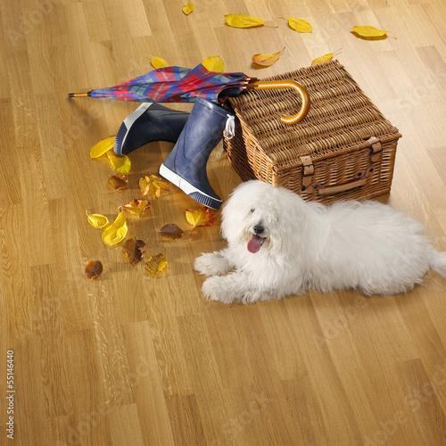 canvas print picture Schirm,Stiefel,Korb,Hund und Herbstlaub auf Parkettboden