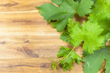 Fresh green grapes leaves on wooden background.
