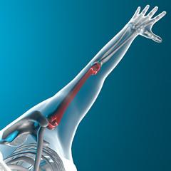Omero osso braccio raggi x corpo umano