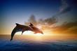 Leinwandbild Motiv Dolphins jumping