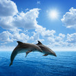 Dolphins jumping - 55159223