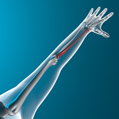 Radio osso braccio raggi x corpo umano