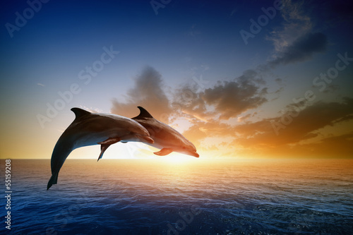 Dolphins jumping - 55159208
