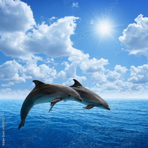 Tuinposter Dolfijn Dolphins jumping