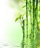 Fototapeta  - bamboo stalks on water © Romolo Tavani