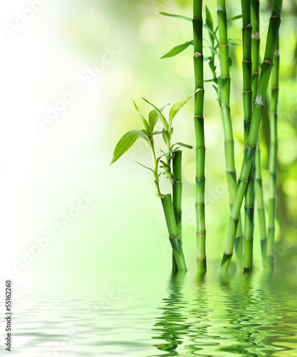 bamboo stalks on water - 55162260