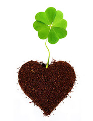 Four-leaf clover isolated in ground heart shape.