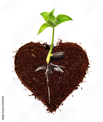 Coffe heart isolated.