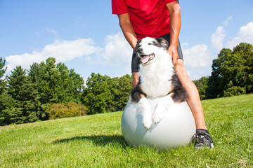 Training dog on Yoga ball
