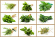 Aromatic herbs collage - Collage erbe aromatiche