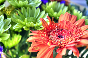 Colorful bouquet with gerberas, valentine or mother's day gift