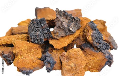 Leinwanddruck Bild Pieces of Inonotus obliquus