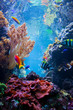canvas print picture - Underwater scene with fish, coral reef