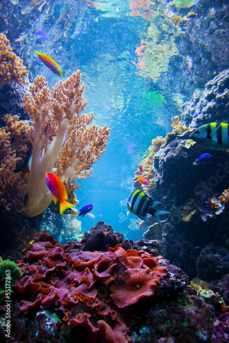 Foto op Canvas Onder water Underwater scene with fish, coral reef