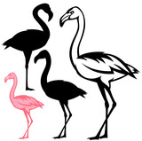 flamingo bird vector outline and silhouette