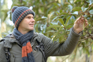 Man looking at medlar tree