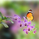 Fototapety Purple orchid flower
