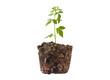 Small plant seedling II