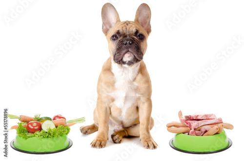 Staande foto Franse bulldog Gemüse oder Fleisch für den Hund