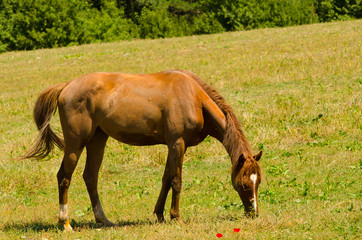 Brown horse standing on the meadow