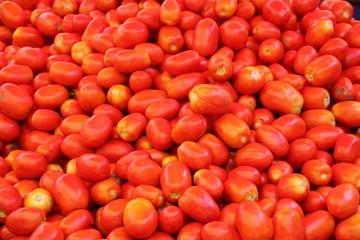 rote Tomaten vom Wochenmarkt