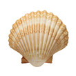 Close up of ocean shell isolated on white background - 55183009
