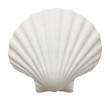 Close up of ocean shell isolated on white background - 55183012