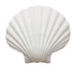 Leinwandbild Motiv Close up of ocean shell isolated on white background