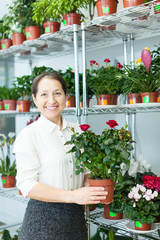Female florist with roses plant